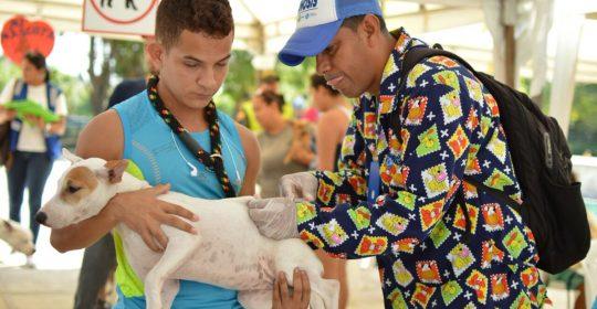 Más de 500 mascotas participaron de feria de registro, vacunación y desparasitación de caninos y felinos