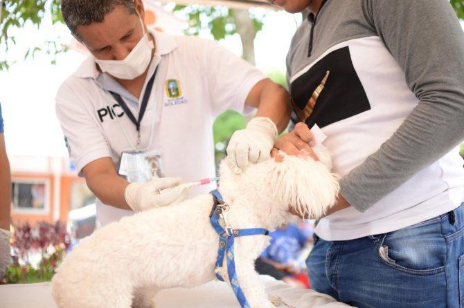 518 mascotas recibieron atención en feria canina en Soledad