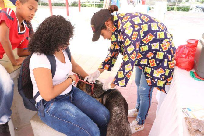Feria canina y felina, ¡los animales también cuentan!