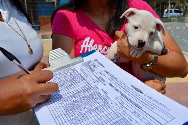 Feria Canina y Felina: en la Soledad Saludable los animales también cuentan
